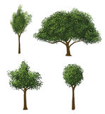 Vector Geplaatste Bomen Stock Afbeeldingen
