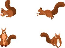 Vector geplaatste eekhoorns, geïsoleerd op witte groep, vectorillustratie vector illustratie