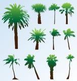 Vector geplaatste palmen. Stock Fotografie