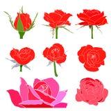 Vector geplaatste rozen Royalty-vrije Stock Fotografie