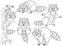 Vector Geplaatste Wasberen Royalty-vrije Stock Foto