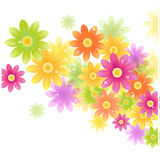 Vector Gerbera flower background Royalty Free Stock Image