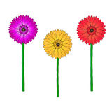 Vector gerbera Stock Photography