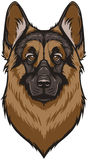 Vector German Shepherd Dog Stock Image