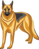Vector. German Shepherd. Stock Photo