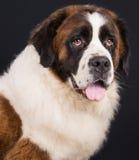 Vector geïsoleerde hond Royalty-vrije Stock Foto's