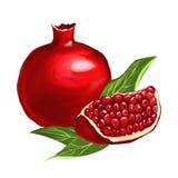 Vector getrokken de illustratiehand van de fruitgranaatappel Stock Afbeeldingen