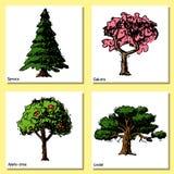 Vector gezeichnete Artarten grüne Waldkiefer Treetopssammlung der Baumskizze Hand der Birke, der Zeder und der Akazie oder des Gr stock abbildung