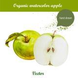 Vector gezeichnete grüne Äpfel des Aquarells Hand mit Blatt- und Aquarelltropfen Stockfotos