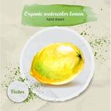 Vector gezeichnete saure Zitrone des Aquarells Hand auf rundem Papierstück Stockfoto