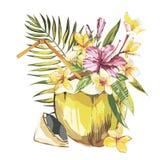Vector gezeichnete Skizze der Kokosnuss Hand mit Palmblatt, Plumeria und Blumen eines Rosahibiscus Tropisches Lebensmittel des Aq Lizenzfreie Stockfotos
