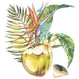 Vector gezeichnete Skizze der Kokosnuss Hand mit Palmblatt-, Plumeria- und Strelitziablumen Tropisches Lebensmittel des Aquarellv Lizenzfreie Stockbilder