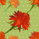 Vector. Ginger flowers. Seamless pattern. Stock Photos