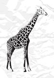 Vector giraffe Stock Photo