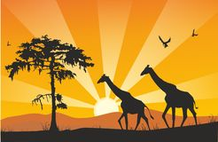 Vector giraffes Royalty Free Stock Image