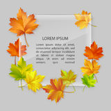 Vector glass banner with colorful autumn maple leaves. Vector glass banner with autumn maple leaves 10eps Royalty Free Illustration
