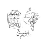 Vector glass terrariums and the seashell with succulents set. Royalty Free Stock Image