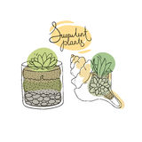 Vector glass terrariums and the seashell with succulents set. Stock Photos