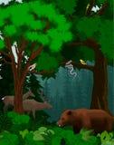 Vector gli alberi forestali verdi del terreno boscoso backlit con l'orso, i cervi, il serpente e gli uccelli Immagini Stock