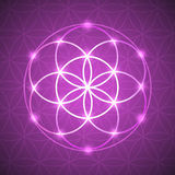 Vector Glowing Flower of Life Symbol Illustration Royalty Free Stock Image
