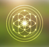 Vector Glowing Flower of Life Symbol Illustration Royalty Free Stock Images