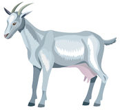 Vector goat Stock Photo