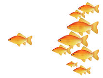 Vector gold fishes Royalty Free Stock Photos