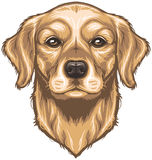 Vector Golden Retriever Royalty Free Stock Photos