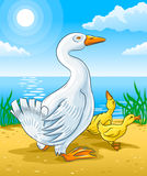 Vector Goose Mother With Gosling Kids Royalty Free Stock Photo