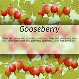 Vector gooseberry banner Royalty Free Stock Photo