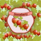Vector gooseberry label Stock Image