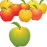 Vector grünen Apfel gegen Set rote und gelbe Äpfel Stockfotografie