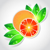 Vector grapefruit Stock Foto