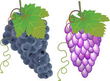 Vector Grapes Stock Photo