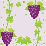 Vector grapes background Stock Photography