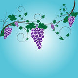 Vector grapes design graphic. Fruits nature Stock Photo