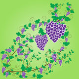 Vector grapes design graphic. Fruits nature Royalty Free Stock Image