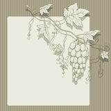 Vector grapes with leaves. Vector grapes with leaves on a striped background and place for text Stock Image