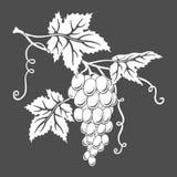 Vector grapes. Stock Photo