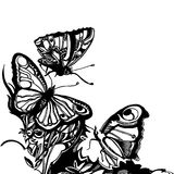 Vector graphic design butterfly art illustration Royalty Free Stock Photos