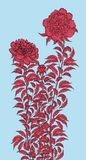 Vector graphic detailed drawing depicting a peony bush royalty free illustration