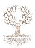 Vector graphic genealogical branchy tree Stock Image
