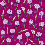 Seamless pattern of iris flowers in a linear style Royalty Free Stock Photography