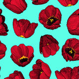 Vector graphic hand-drawn ink seamless pattern of red tulip Stock Photos