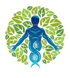 Vector graphic illustration of muscular human depicted as DNA   Royalty Free Stock Images