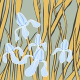 Vector. Graphic stylized image of iris flower. illustration with . Endless stylish texture. Template for design textile Royalty Free Stock Photo