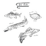 Vector graphical illustration set of fish. Vector graphical vintage illustration set of fish Royalty Free Stock Photos