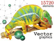 Vector graphics with a chameleon. Stock Photography