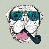 Vector grappige beeldverhaal hipster hond Bullmastiff Royalty-vrije Stock Afbeeldingen