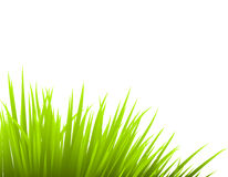 Vector grass Stock Image